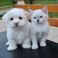 Dog and Cat lover